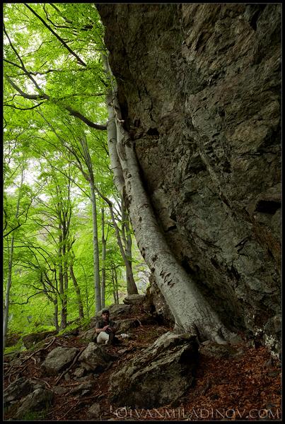 вековна гора