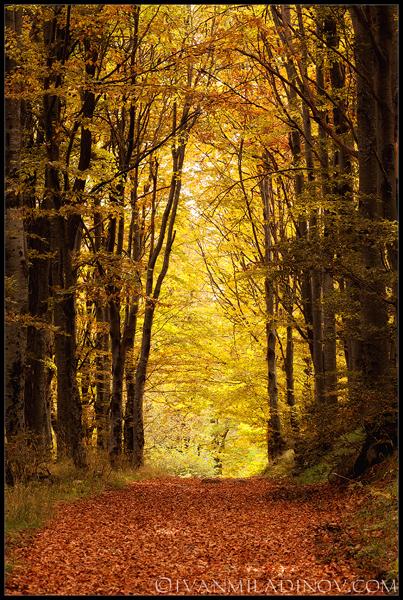 есен витоша