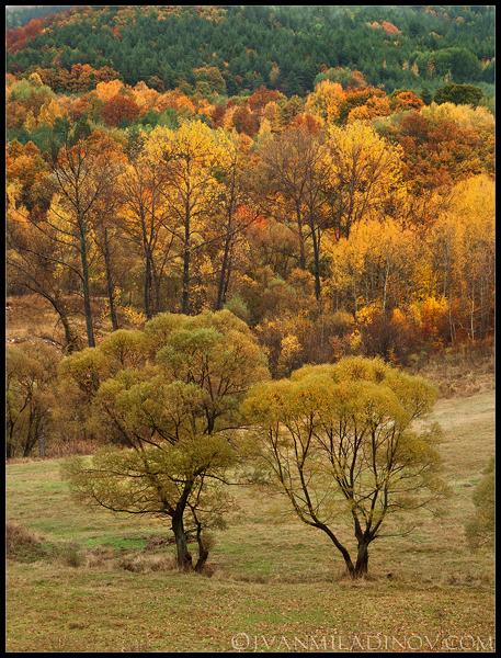 есен край кладница