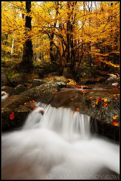 есен на витоша