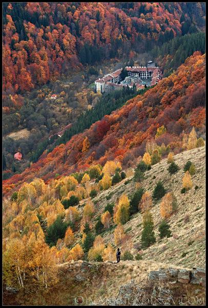 Риломанастирска гора