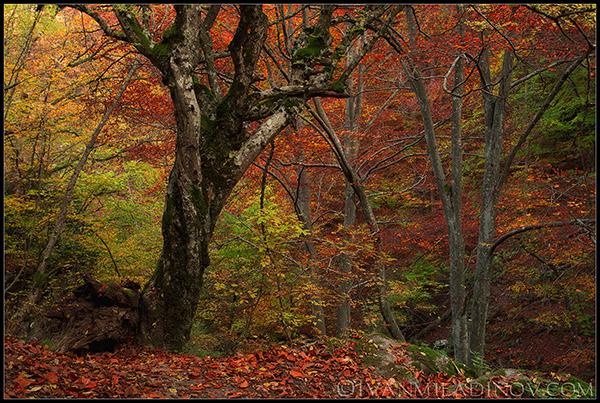 есенни родопи