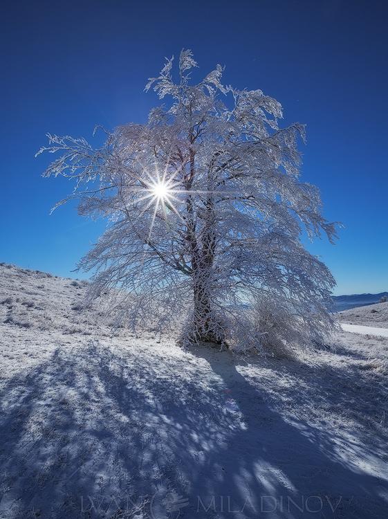 зимно дърво